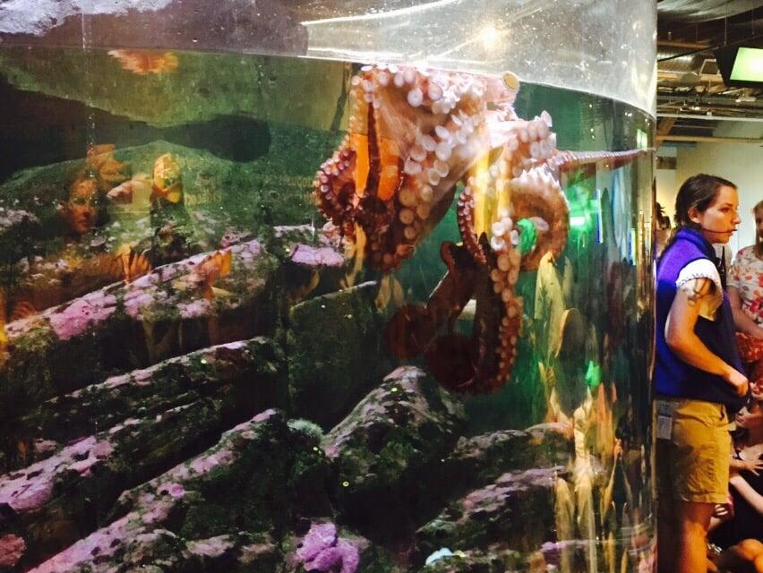 Big Giant Octopus Is Sleeping Yelp
