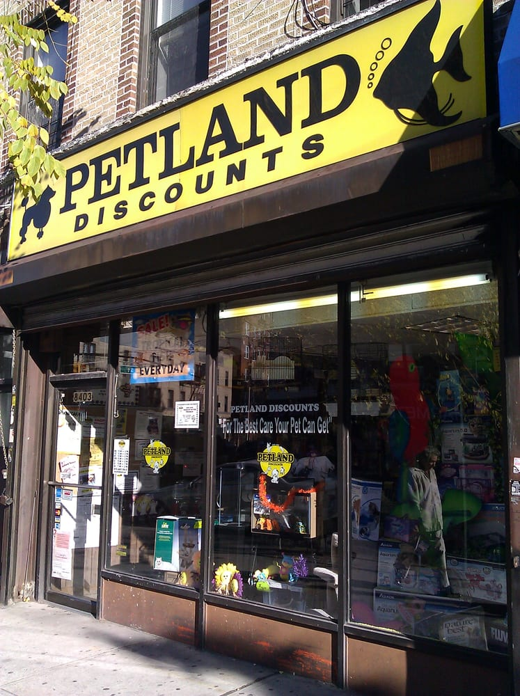 Petland Discounts Pet Stores Bay Ridge Brooklyn Ny