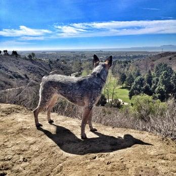Arroyo Verde Park Dogs
