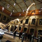 Dinosaurier...Giganten der Urzeit...