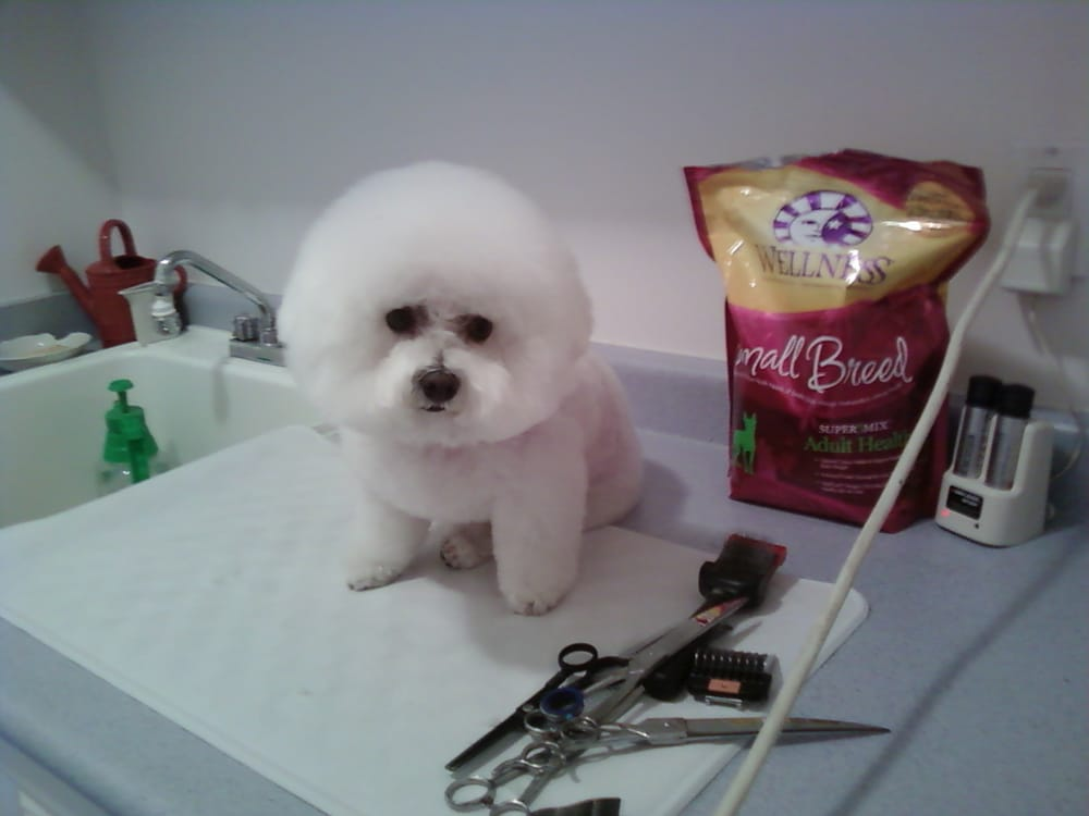 how to start up a dog grooming business