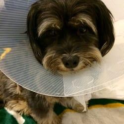 veterinary care center   los angeles ca vereinigte staaten my poor