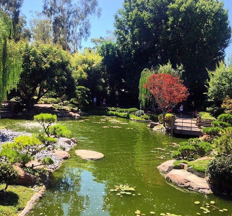 Earl burns miller japanese garden 707 photos venues for Csulb japanese garden koi pond