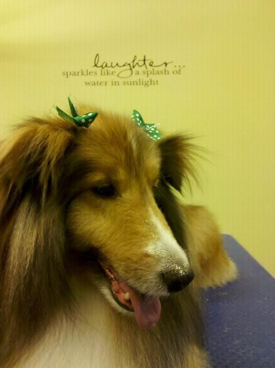 Green dog grooming spa and dog wash pet groomers york for Dog grooming salons near me