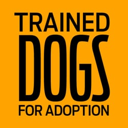 Trained Dogs For Adoption Altadena