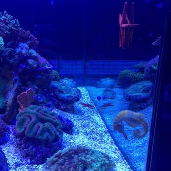 Lax Aquarium 133 Photos 55 Reviews Pet Shops 5310