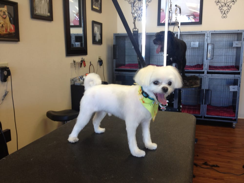 Sissy s pet grooming salon pet groomers casas adobes for A wagging tail pet salon