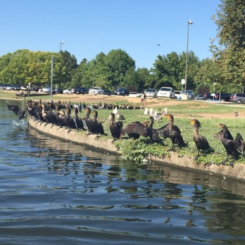 lake balboa park essay Lakes regional park is fabulous join us on our stroll through the park through with this photo essay the wildlife is fabulous, you can cycle through the.