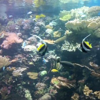 The New York Aquarium 311 Photos Zoos Coney Island