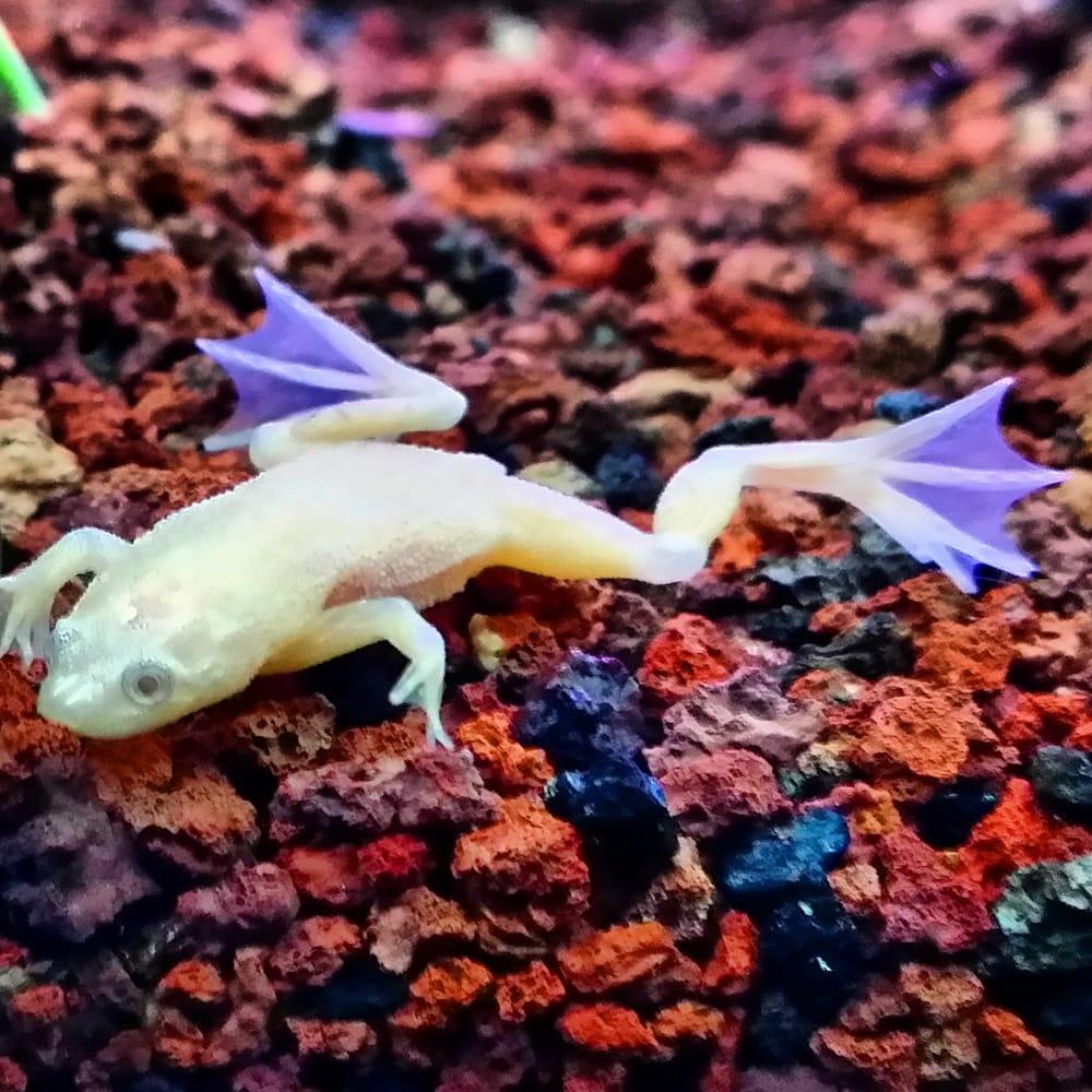 Dwarf Tropical Fish 7seas Tropical Fish San