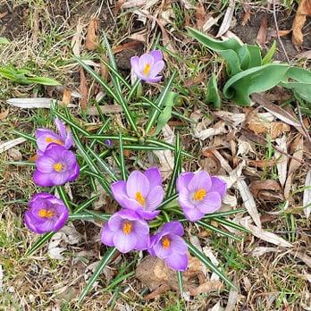 Stein Gardens Gifts Nurseries Gardening Mequon Wi Yelp