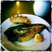 Morning mackerel