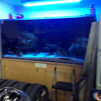 Auto Sound Performance - Their huge fish tank - Daly City, CA, Vereinigte Staaten