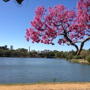 Beautiful blooming trees & lake.