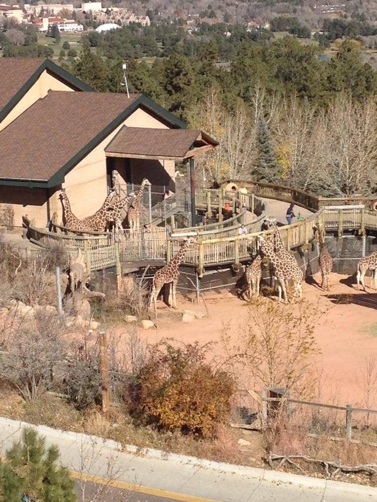 Dog Training Schools In Colorado Springs