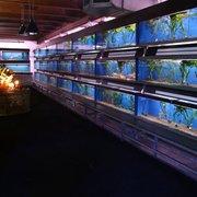 new brussels aquariums magasin pour animaux de compagnie bruxelles bruxelles avis