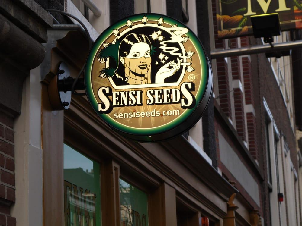 sensi seed bank souvenir shops centrum amsterdam noord holland the netherlands reviews. Black Bedroom Furniture Sets. Home Design Ideas