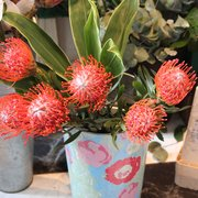 Proteas flowers
