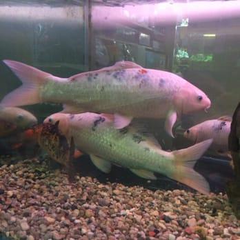 Aquatec Ponds Aquarium Services 4365 Jackson Rd Ann