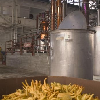 St George Spirits - Alameda, CA, États-Unis. Buddha's Hand citrons prepare for a second lease on life