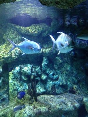 Fish Aquarium Jenks Oklahoma Oklahoma Aquarium Jenks