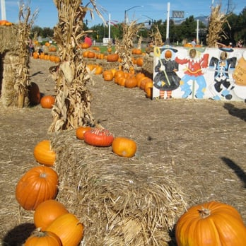 Forest Home Farms Pumpkin Patch San Ramon