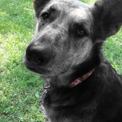 RedRoverDogz - Anya likes to play keep away! - Indianapolis, IN, Vereinigte Staaten