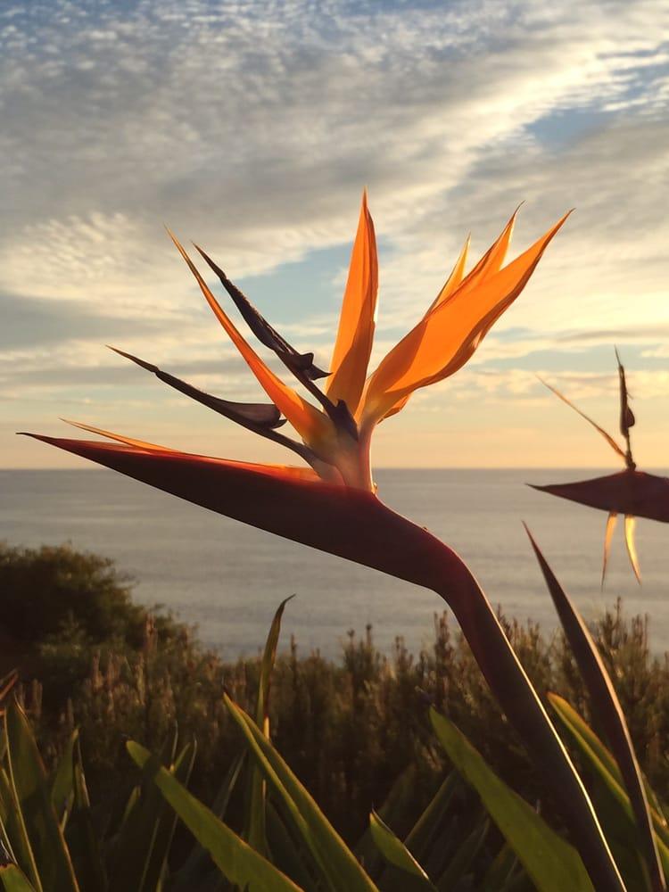 Self Realization Fellowship Hermitage Meditation Gardens 399 Foton Rekreationsomr Den
