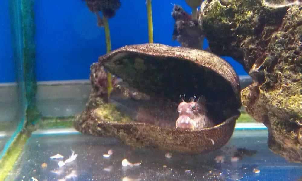 Aquarium world pet stores fairbanks northwest crossing for Fish store houston