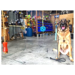 Blue Collar Working Dog Los Angeles