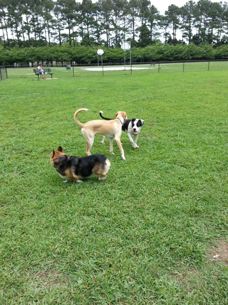 Dog Parks In Virginia Beach Va