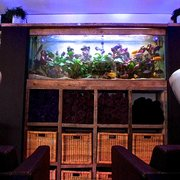 Malawi Cichlid Fish tank at Samuel David Hairdressing in Bristol
