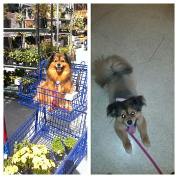 Dog Grooming In Belmont Nc