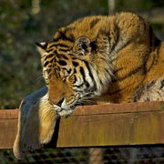 South Lakes Wild Animal Park, Dalton In Furness, Cumbria