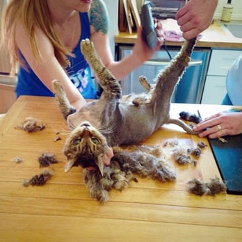 Carolyn S Mobile Cat Grooming