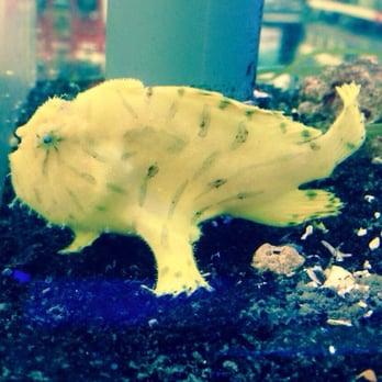 Aquatek tropical fish 23 photos local fish stores for Fish store austin