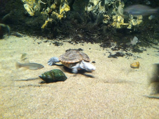 The North Carolina Aquarium At Fort Fisher Aquariums