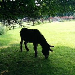 Just a grazing donkey in East London