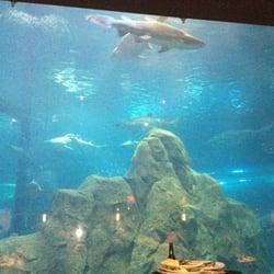 Adventure Aquarium - Camden, NJ, United States. Shark tank ...