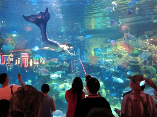 Silverton Aquarium Aquariums Las Vegas Nv Yelp