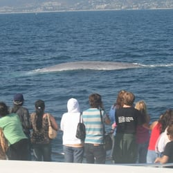 Dana wharf sportfishing and whale watching 231 photos for Dana point fishing charters