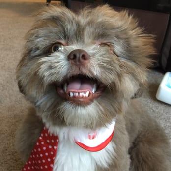 Perfect pet salon 66 photos pet groomers concord ca for A perfect pet salon