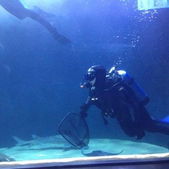 Aquarium Of The Bay San Francisco Ca United States