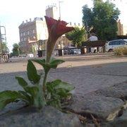 die Espressobar lässt die Blumen blühen