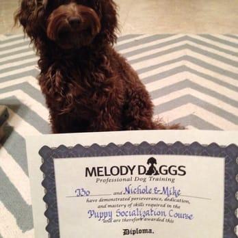 Melody Daggs Dog Training