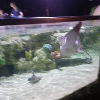 Austin Aquarium Aquariums Austin Tx Reviews