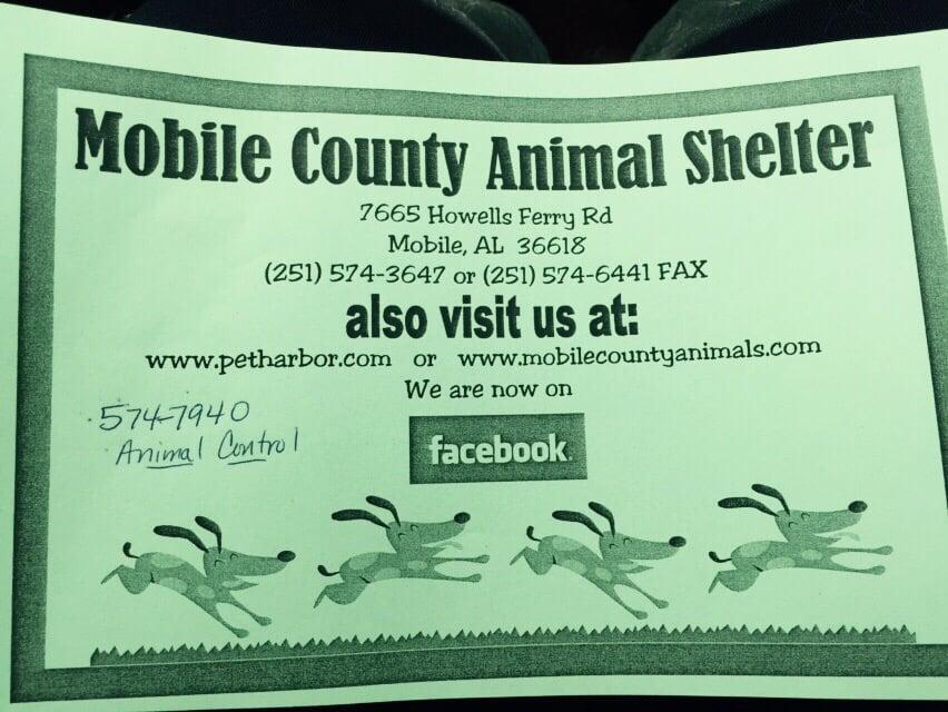 Animal Shelter In Mobile Al : Mobile county animal shelter shelters