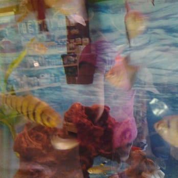 Papa jim s tropical fish 11 photos 11 reviews local for Jims exotic fish