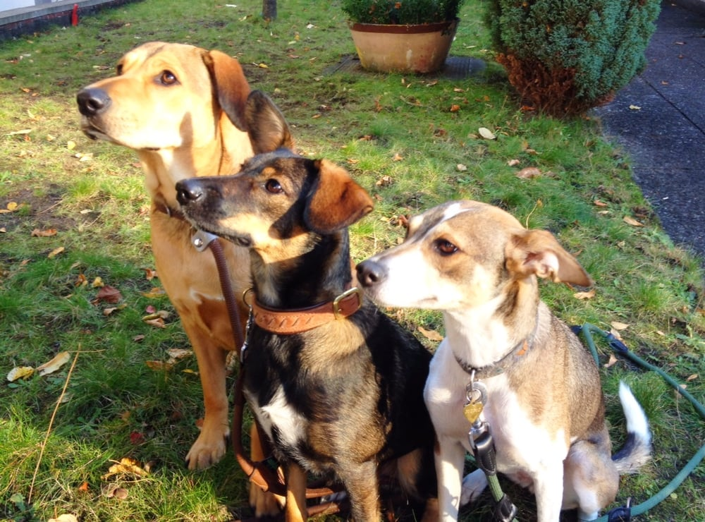 Hundeschule dassendorf