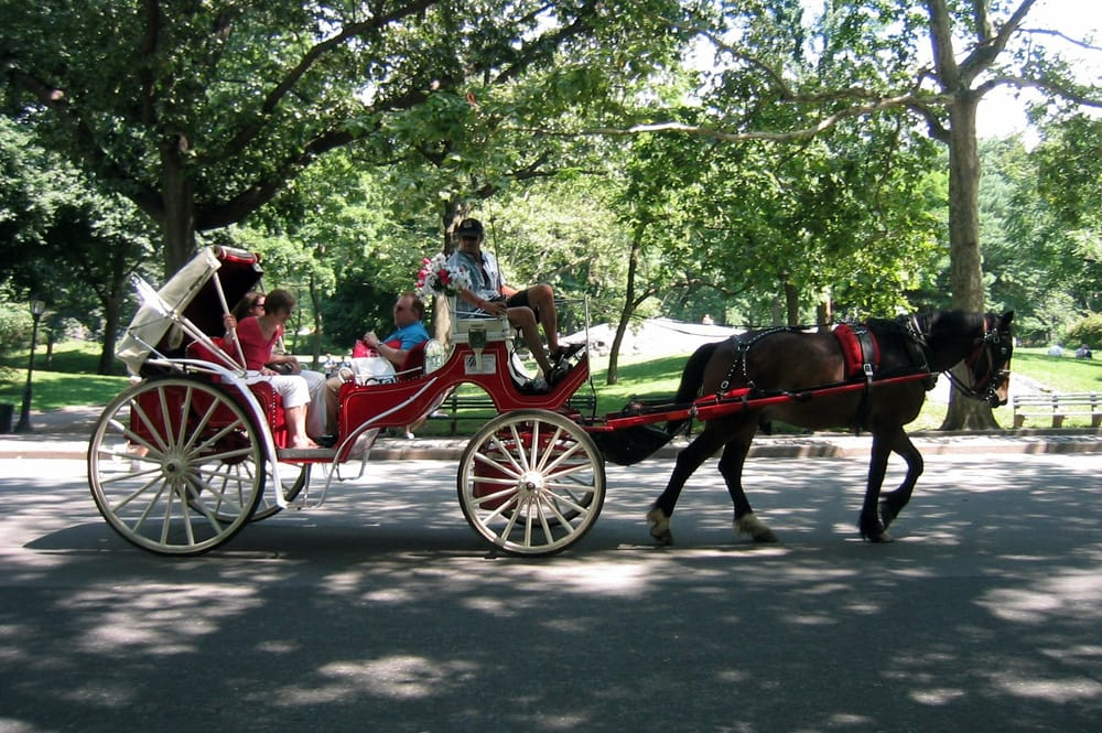 Central Park Nyc Carriage Rides Carriage Ride Central Park